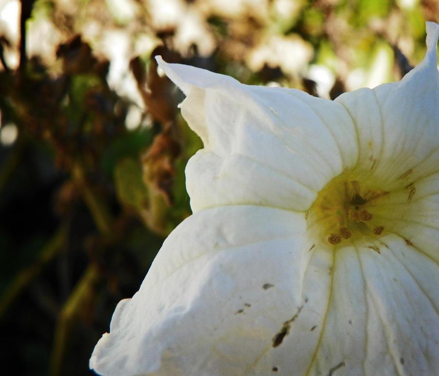white flower wallpaper > white flower Papel de parede > white flower Fondos