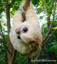 Baby Moss-Sloth - Handmade Fantasy Creature by RikerCreatures