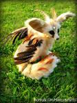 Flighted Fennec Fox - Close-up