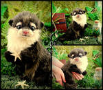 Gilly the Baby Otter
