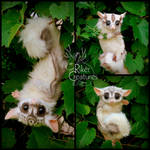 Sugar Glider Twins Closeup