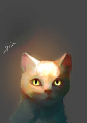 yep it's just a cat sketch by Spin-T