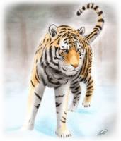 Tiger by SheltieWolf