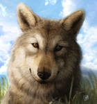 Wolf face by SheltieWolf