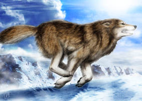 Wolf Run by SheltieWolf