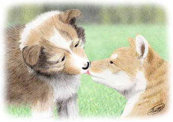 Dog pup : Sheltie and Shiba by SheltieWolf