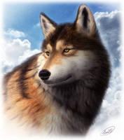 Grey wolf by SheltieWolf