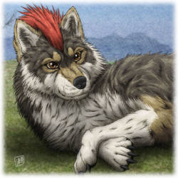 Wolf Male