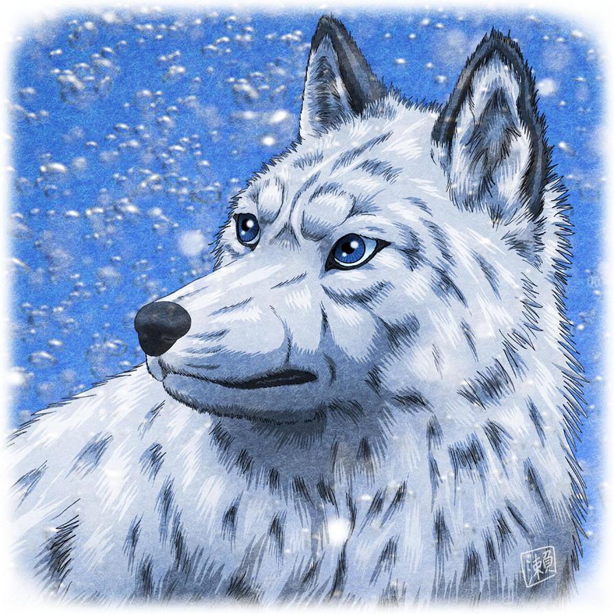 Beautiful Female Wolf By SheltieWolf