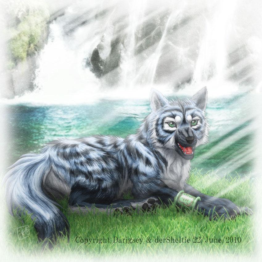 Beautiful Wolf Drawings