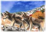 Wolf's Mountain