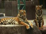 Tiger'04