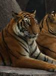 Tiger'07