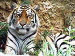 Tiger'09