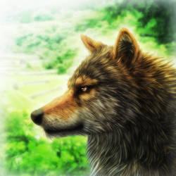 Wolf by SheltieWolf