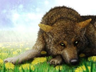 Wolf, Dandelion by SheltieWolf