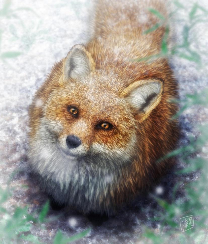 Fox by SheltieWolf