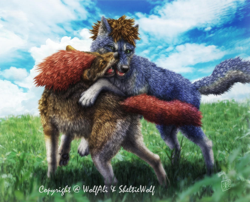 Commission: Wolf Fight by SheltieWolf
