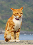 Cat in a island