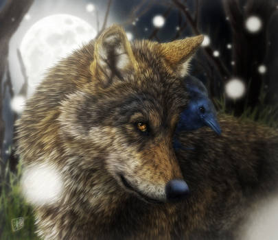 Evening Wolf