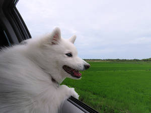 Dog's Holiday