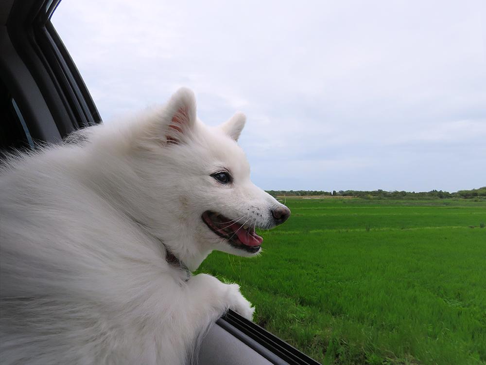 Dog's Holiday by SheltieWolf
