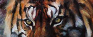 stalker (eyes) by snellynell