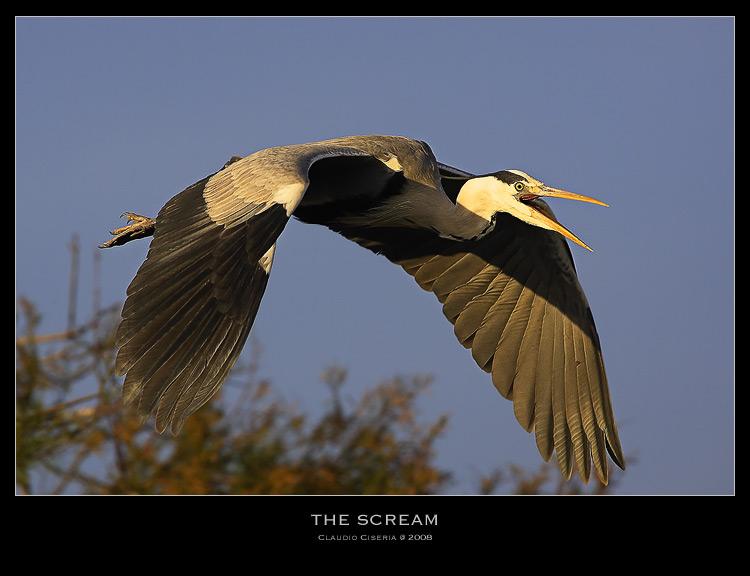 The Scream by ClaudeG