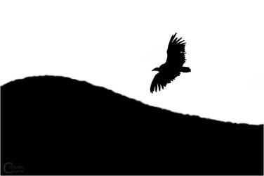 Griffon Vulture by ClaudeG