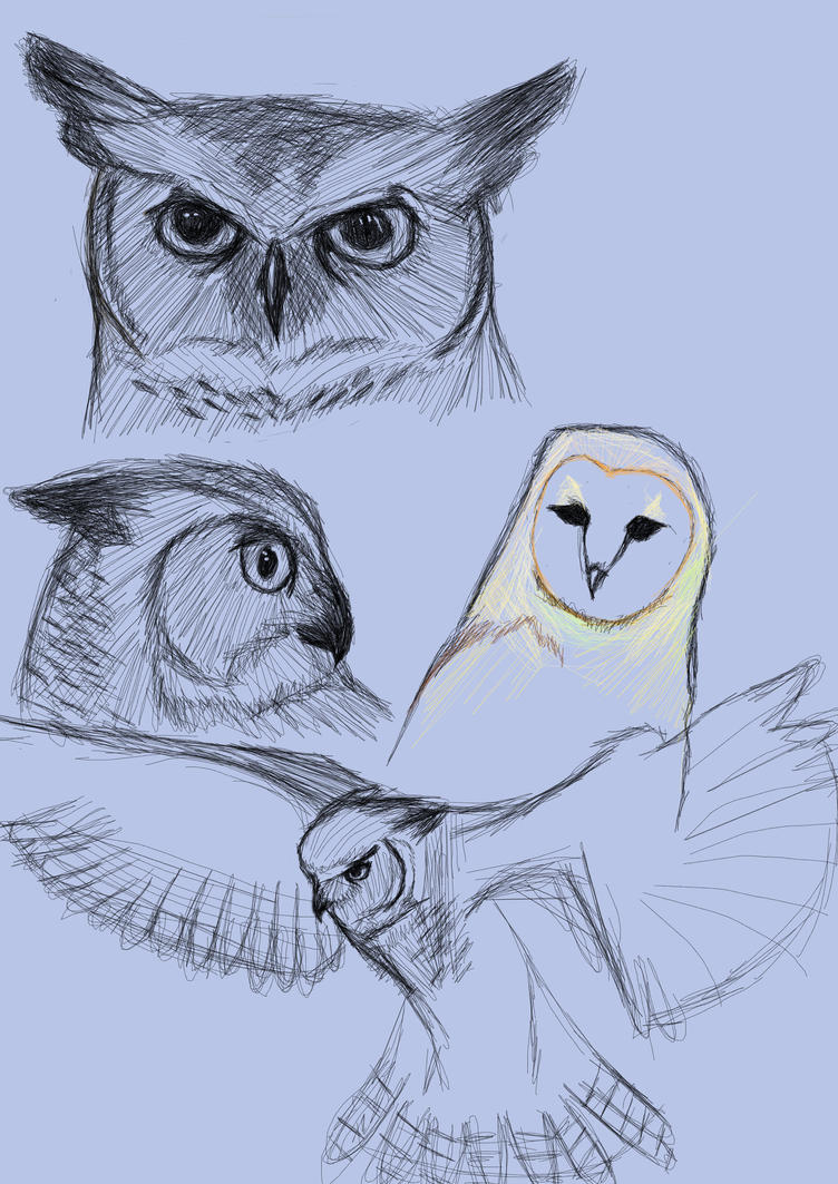 owl sketches by firefoxangel