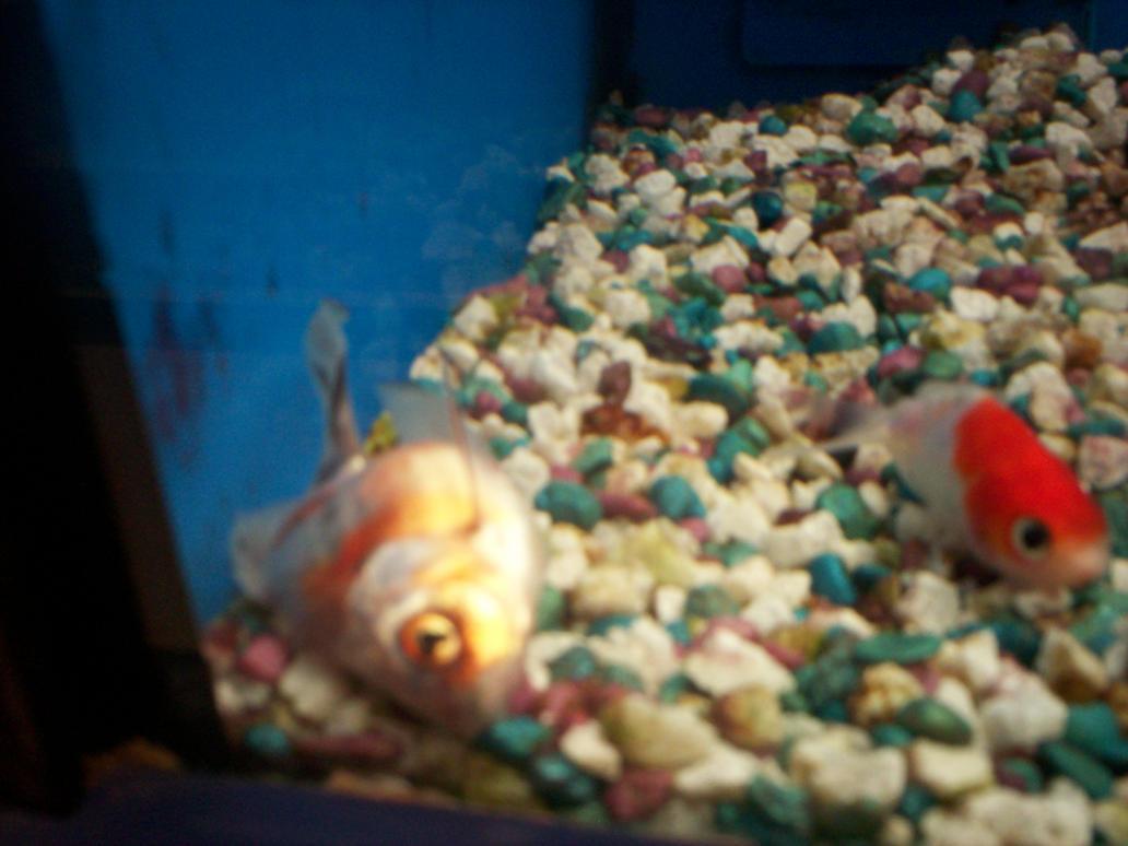 Dead fish at walmart 2 by jamielynneaiken on deviantart for Fish at walmart