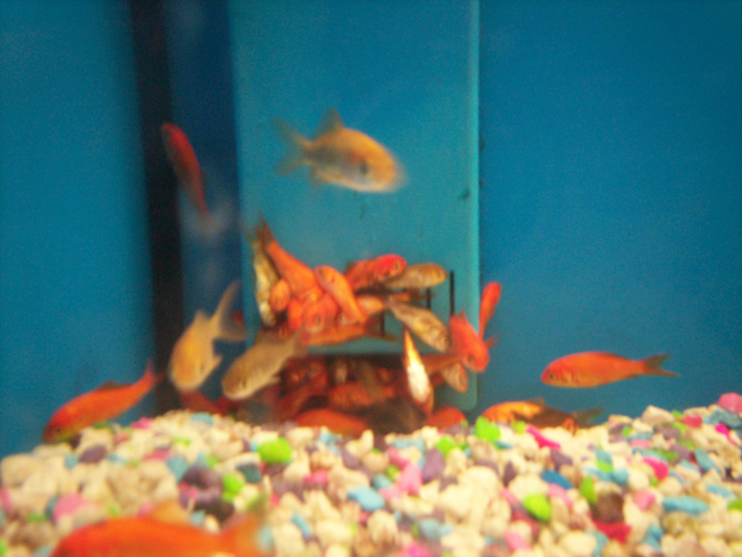 Dead fish at walmart 3 by jamielynneaiken on deviantart for Fish at walmart