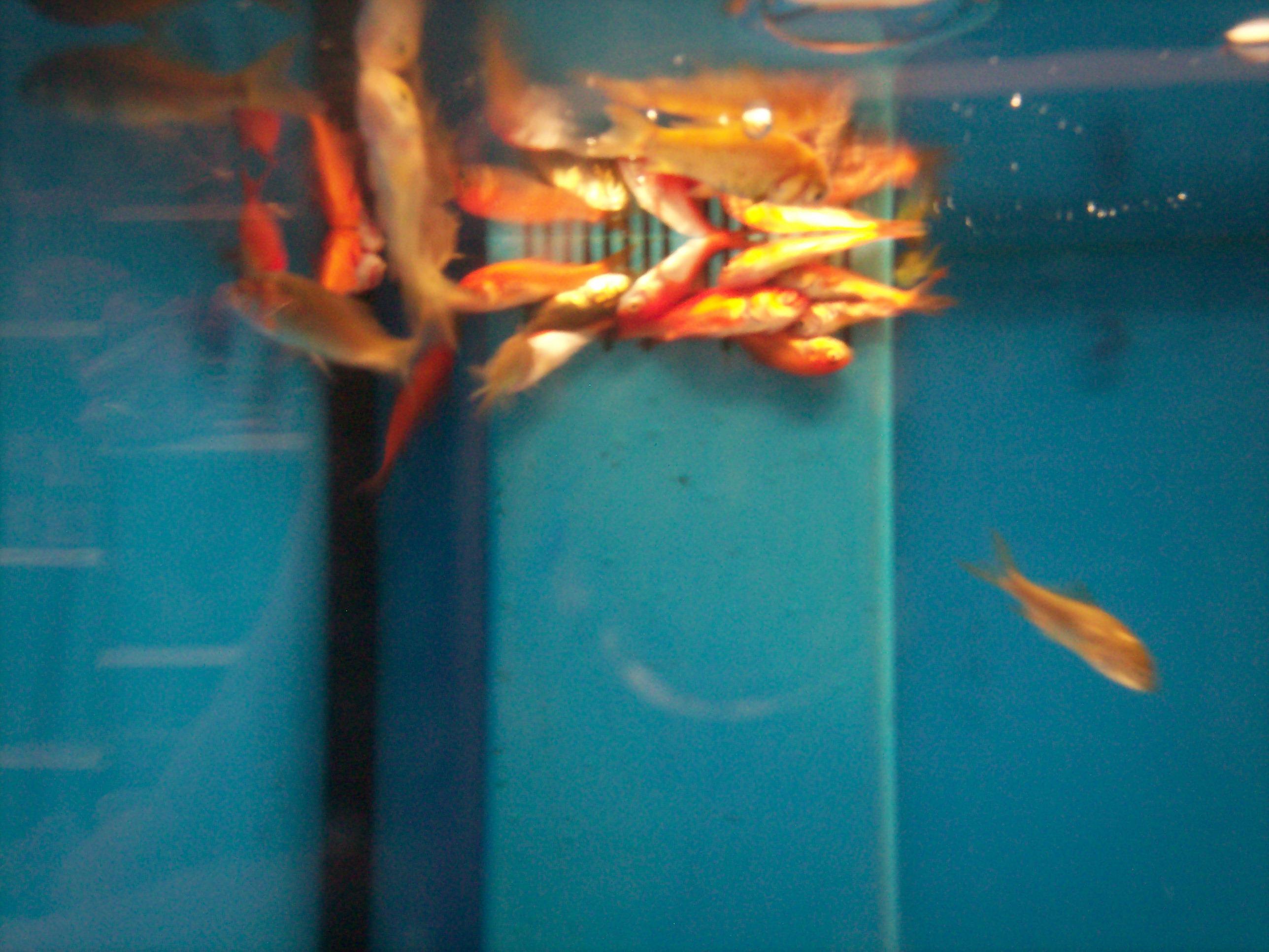 Dead fish at walmart 4 by jamielynneaiken for Fish at walmart