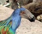 Bird by Skull-Island-Master