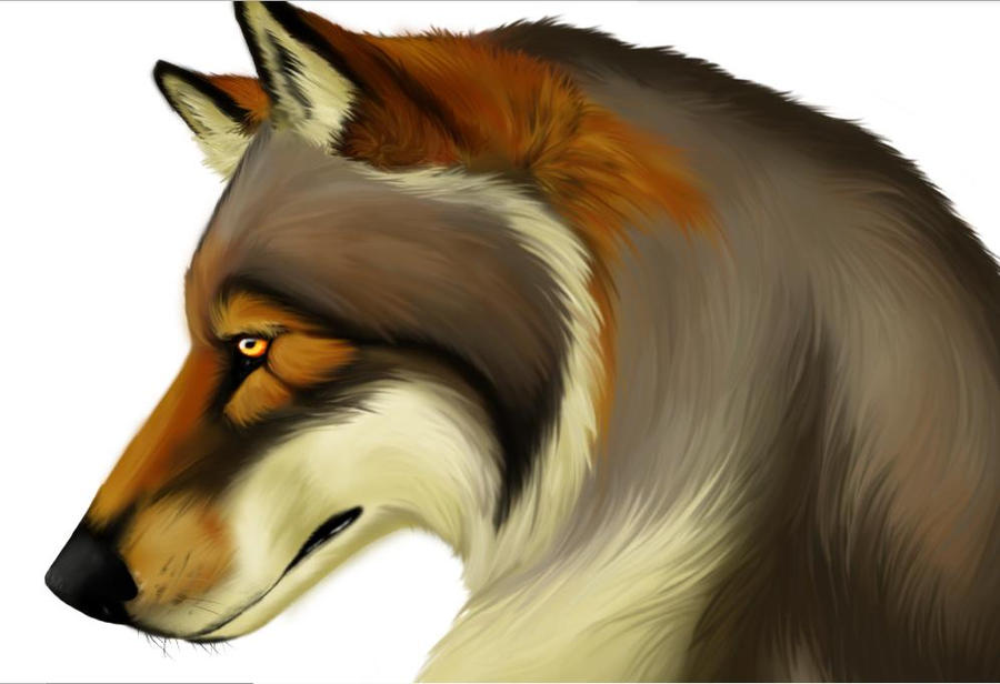 Colored Winged Wolf Drawings