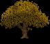 yellow_oak_by_lunamoth19-dautgwg.png