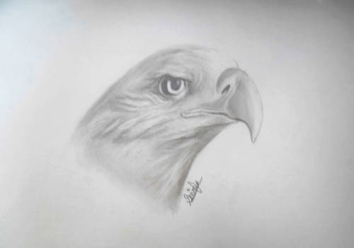 Eagle (with tutorial)