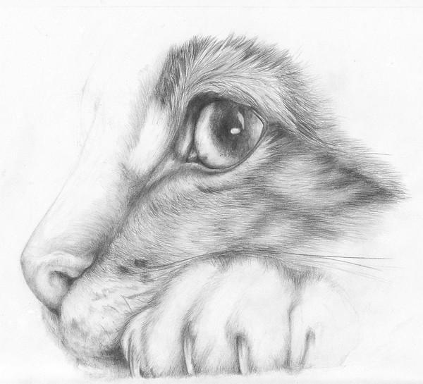 Cat by WhiteSirin
