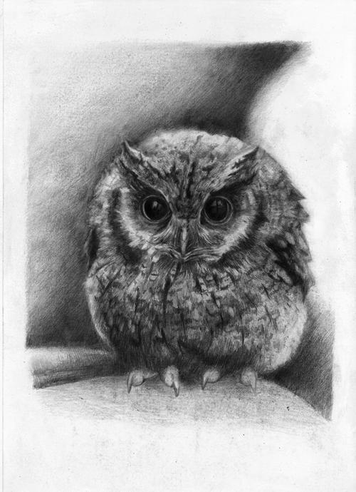Owl by WhiteSirin