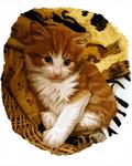 kitty by SandraWhite
