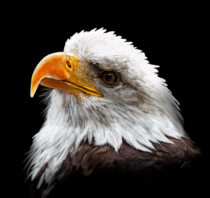 Bald eagle. art by SandraWhite