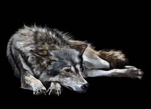 wolf v4