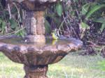 Blue Canary