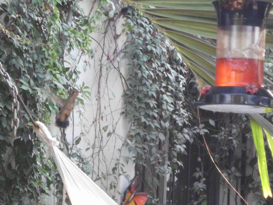 The Hummingbird feeder by SilverMoon-Archer