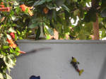 Sparrows after me house