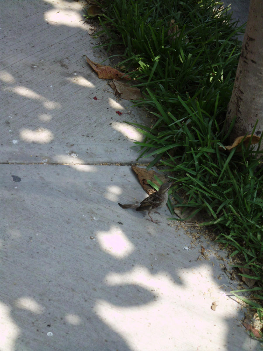 Sparrow by SilverMoon-Archer