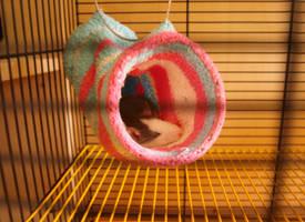 Rat in house of socks by Slovanka