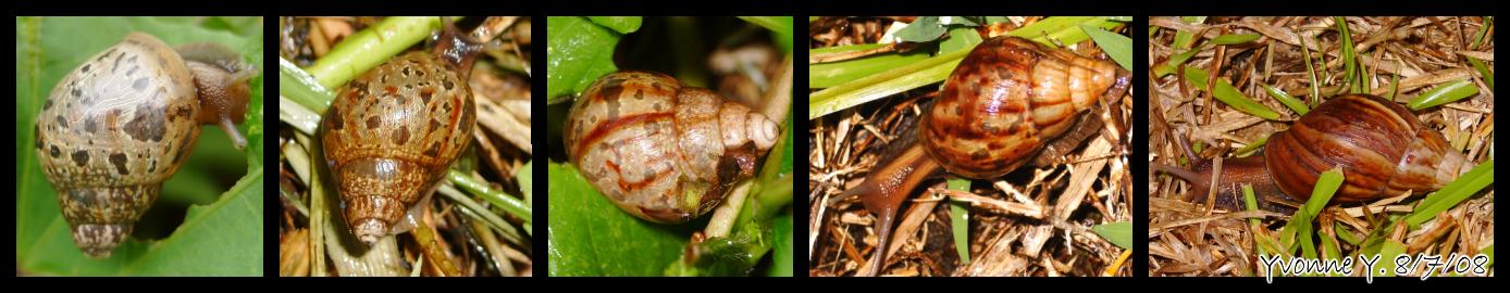 Snail Invasion? by pri...