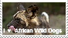 I love African Wild Dogs by Keshvel