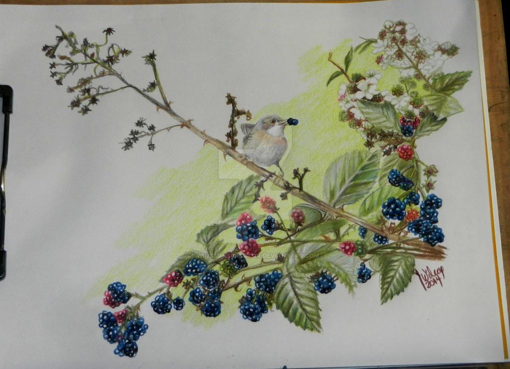 raspberries by winstonscreator